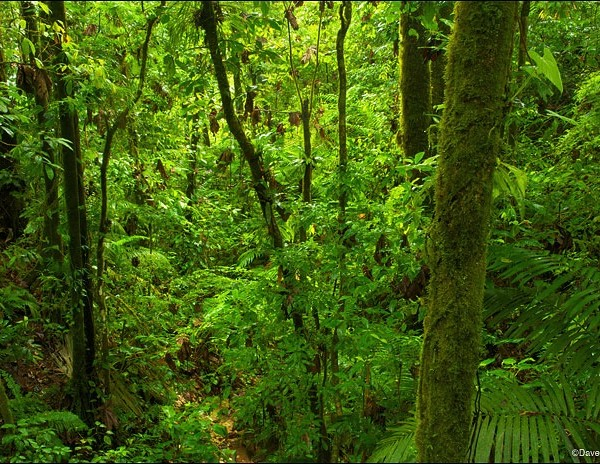 Hiking Tour on the Rain Forest