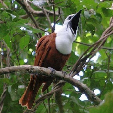 Birds on monteverde