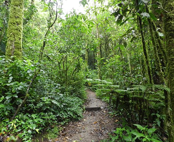Cloudforest-Monteverde-CostaRica