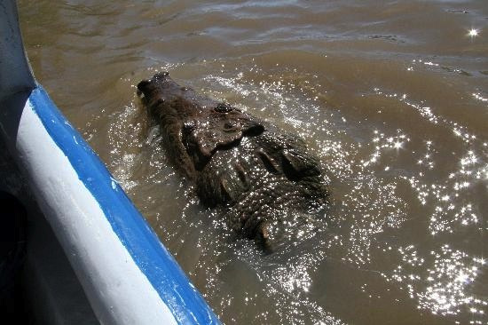 crocodile-by-the-boat