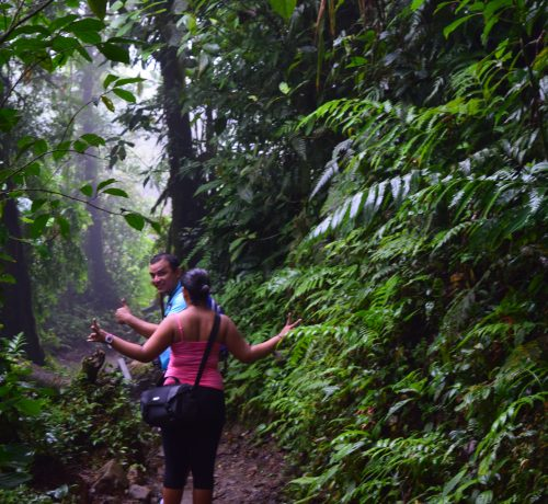 GuanacCosta Rica National Park tours