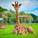 Costa Rica guided tours to Ponderosa Adventure Park